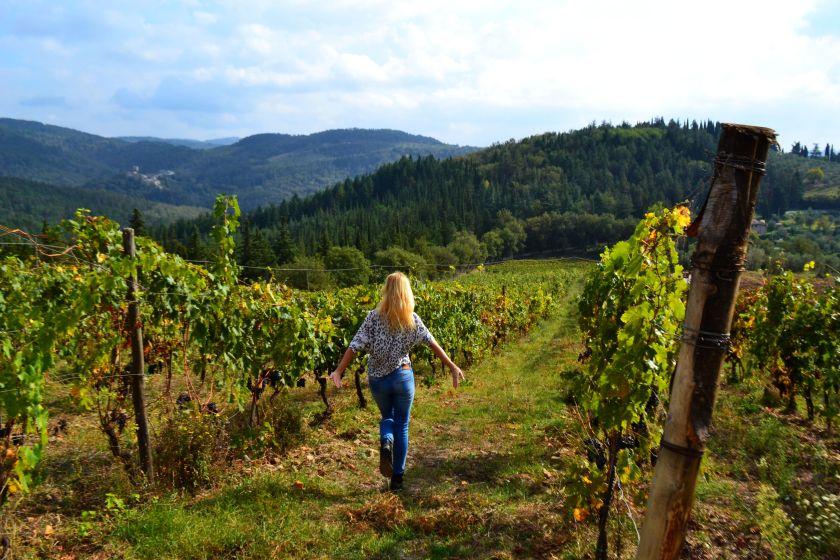 Chianti vineyards, Riecine vineyard